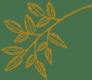 Plante doré
